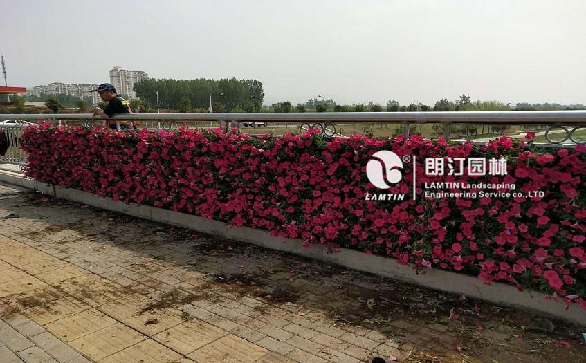 朗汀园林5012植物墙模块式花盆打造的墙体生态景观