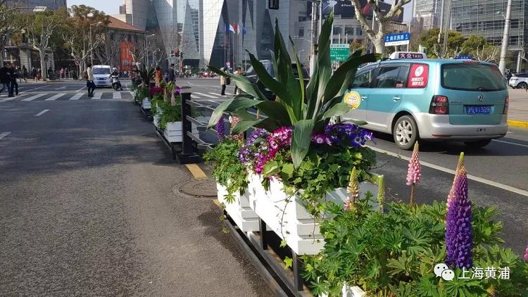 上海道路花箱花卉
