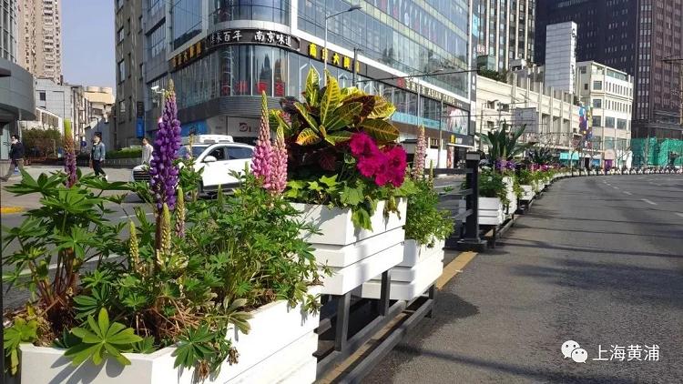"""上海道路花箱花卉中的""""天、地、人""""思想"""