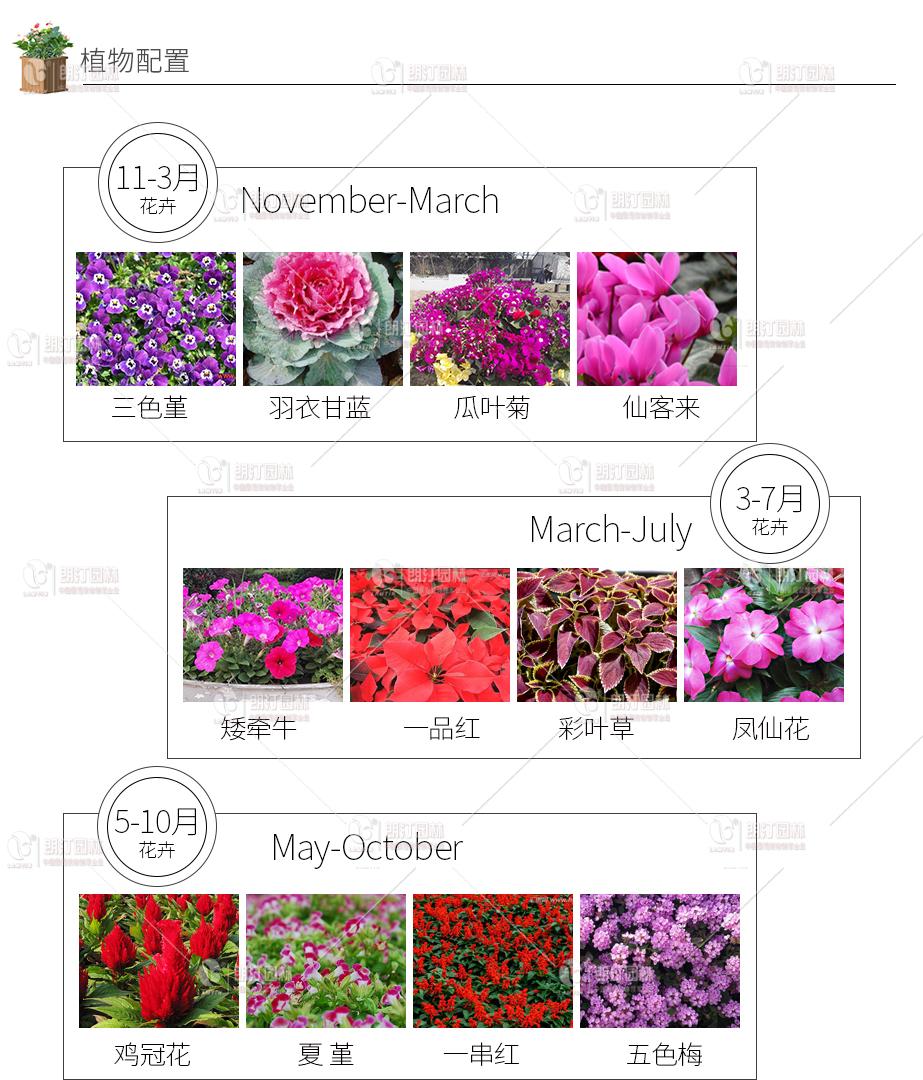 花箱植物配置方案