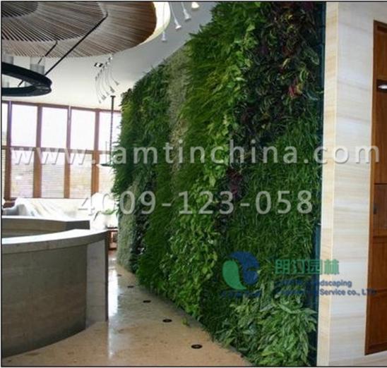 安徽朗汀室内墙体绿化又出新招